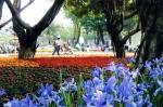 圓山園區:人賞花,花賞人