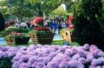 新生公園:粉紫色的地毯