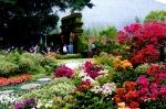 上海庭院:百花綻放